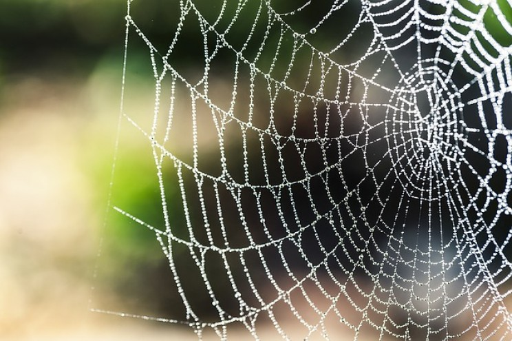 These Tiny Spiders Can Travel Huge Distances Using Self-Produced Silk Parachutes