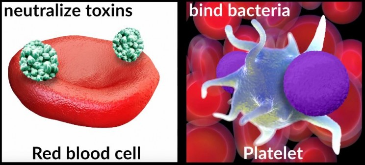 Supersonic Powered Nanobots Use Platelets and Red blood cells to clean blood