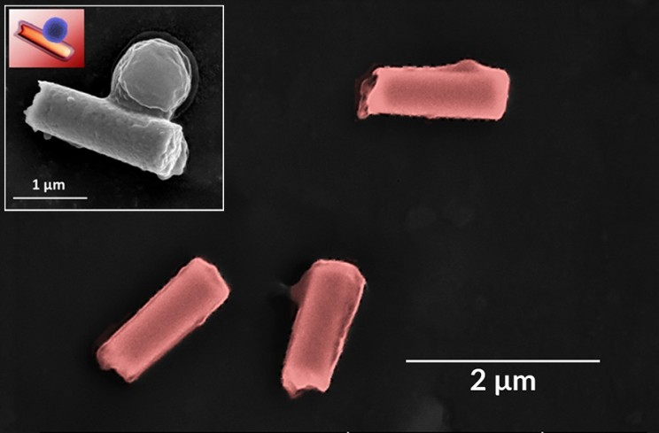 Ultrasonic Powered Nanobots Remove Toxins and Bacteria from Blood