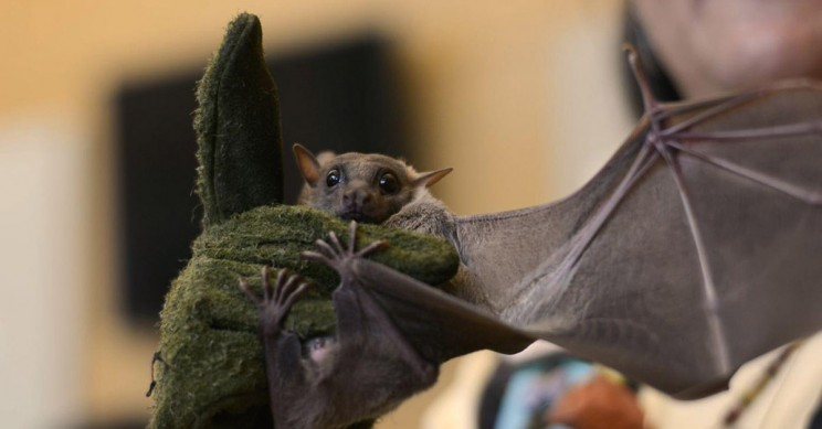Researchers Model Bat Flight in 3D for the First Time