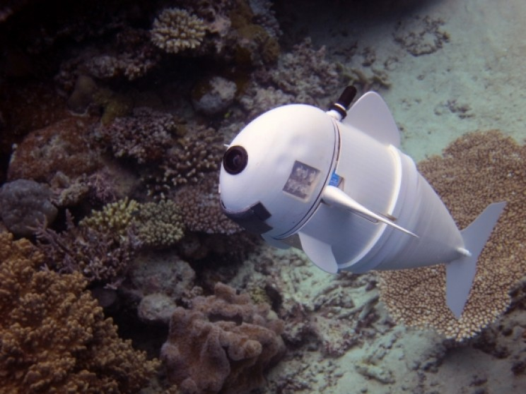 New Robotic Fish Could Change How Researchers Study Sea Life