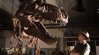 Paleontologists Find the World's Largest T. Rex, and It Was a Bad-Ass