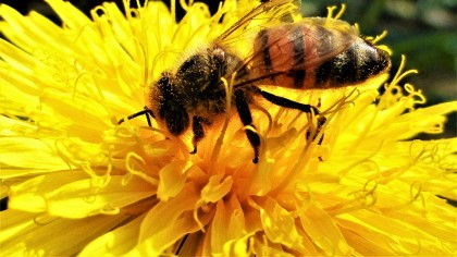 Walmart Might Be Building Robo-Bees to Pollinate Crops
