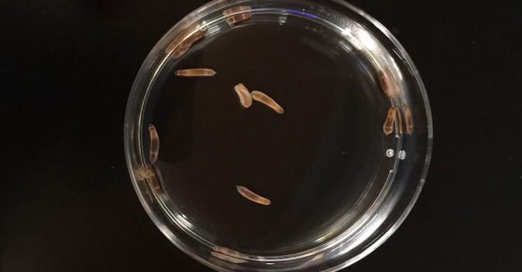New Study Unlocks Secrets of Full Body Regeneration in Animals