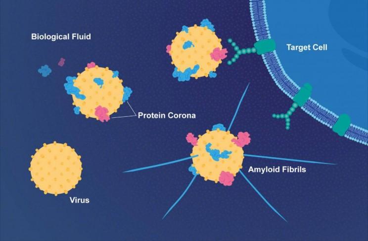 Virus Protein Corona