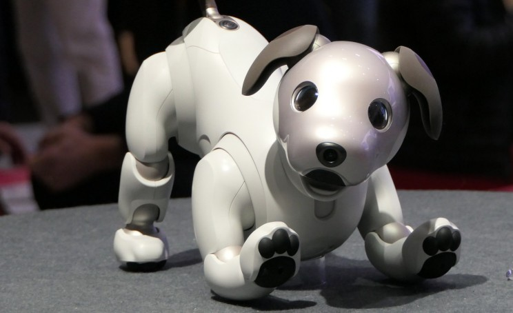 Discarded Robot Dogs in Japan are Honored with Funerals