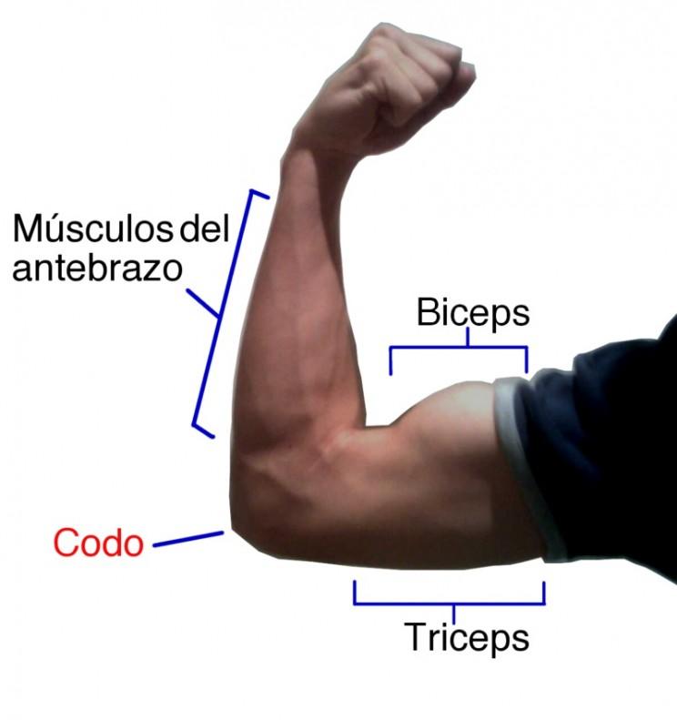 Antagonistic Bicep and Triceps Biorobotics