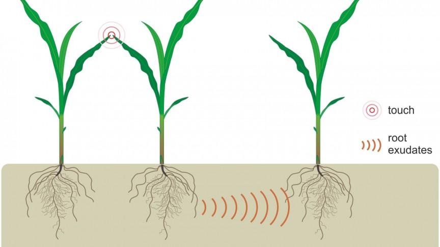 Study Reveals Plants Communicate Through Root Secretions