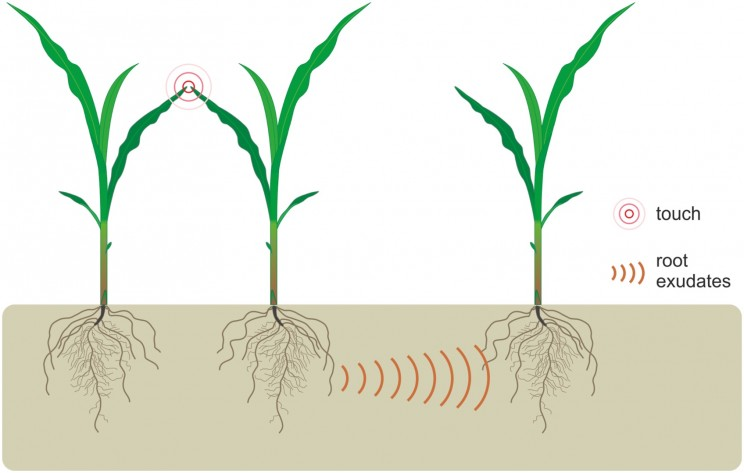 Study Reveals Plants Communicate Through Root Secretions