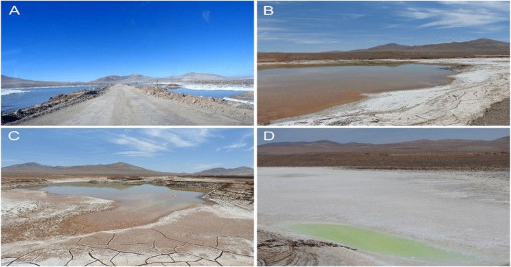 Rains in the World's Oldest Desert Are Creating 'Martian Lakes', Reveals Study