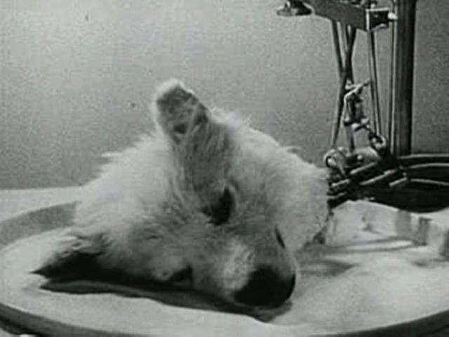 7 Creepiest Science Experiments of All Time That Will Give You Nightmares