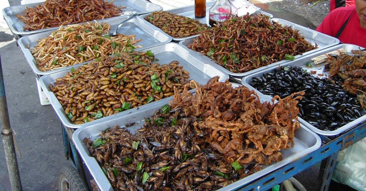 Future Of Food Insects