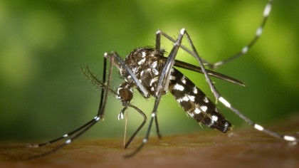 Your Mobile Can Help Researchers Identify Mosquito Species