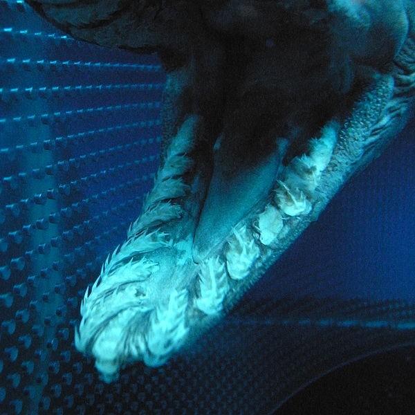 A Prehistoric, Dinosaur-Era Shark Was Found off the Coast of Portugal
