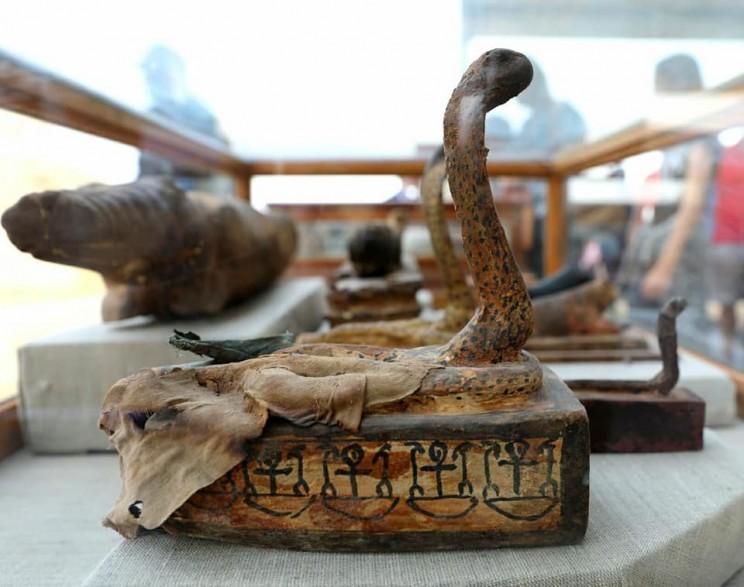 cobra egypt mummy
