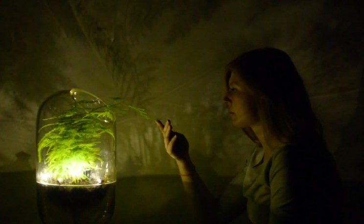 These Lamps Light Up Using Plants and Photosynthesis