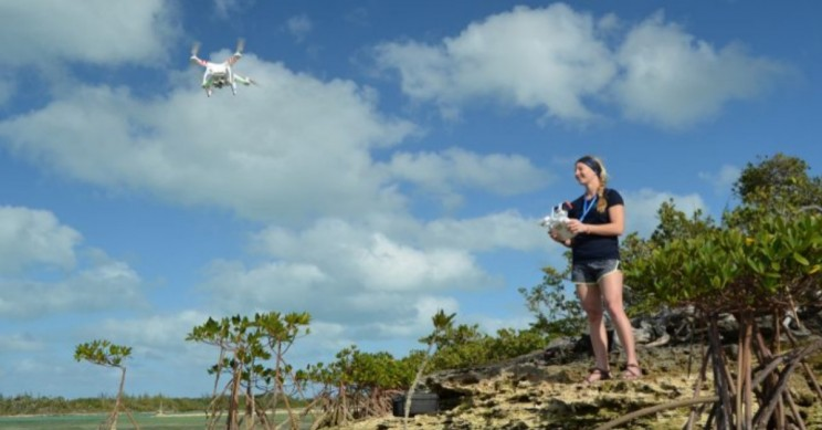 Drones Play New Role in Tracking Ocean's Biggest Creatures
