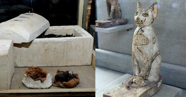 Cat and Scarab Mummies Discovered in 2,500-Year-Old Egyptian Tomb
