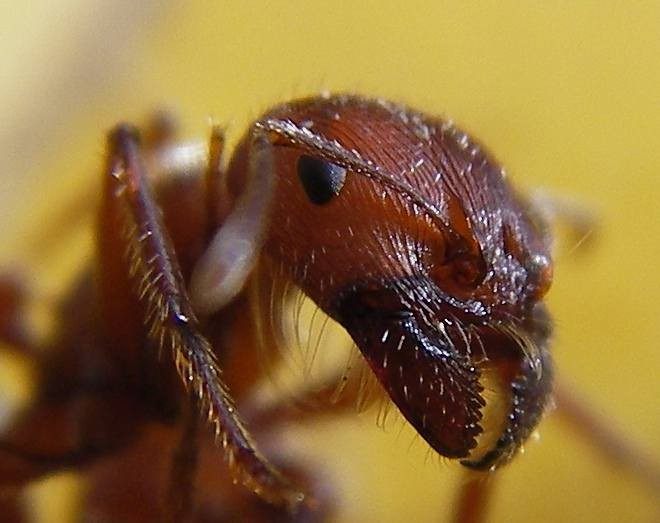 Swarm Intelligence: How Autonomous Cars Might Need to Learn from Ants
