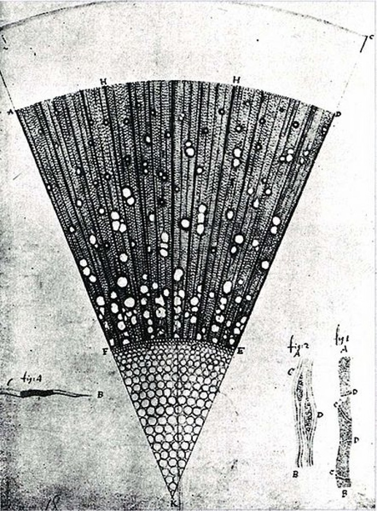 Antonie van Leeuwenhoek plant observations