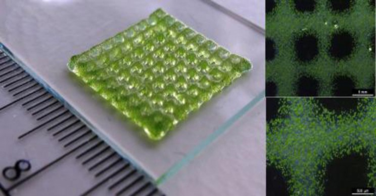 New 3D Bioprinting Method Allows Non-Invasive Monitoring of Oxygen Levels in Cells