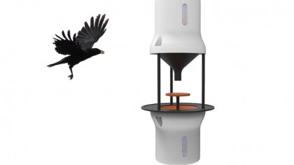 This Startup Teaches Crows to Pick up Cigarette Butts from City Streets