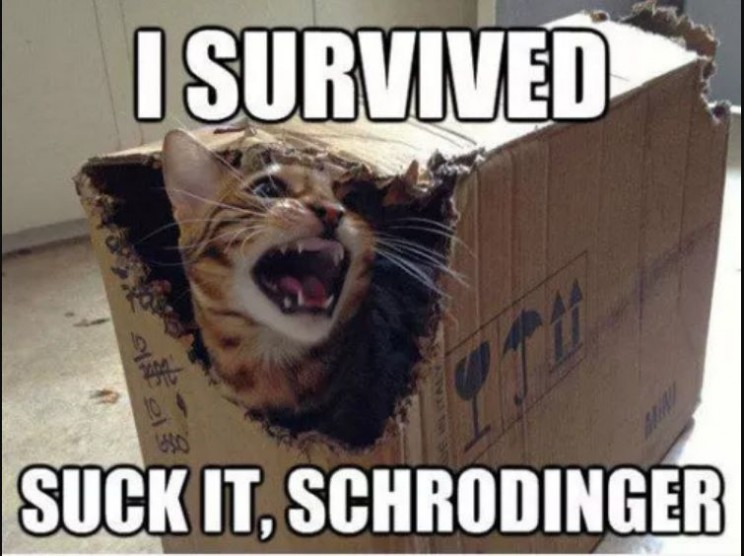 funny memes about science cat lives
