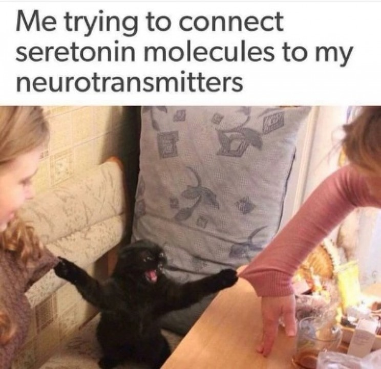 funny memes about science serotonin