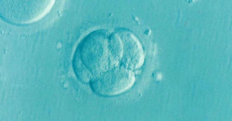 Japan Set to Approve Controversial Gene Editing of Human Embryos