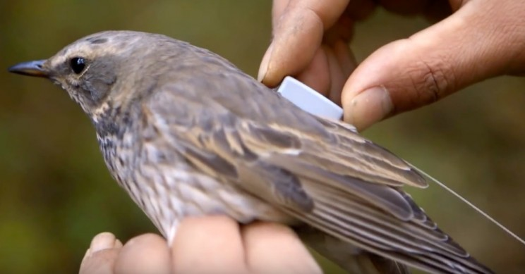 Why Do Scientists Want to Track Animals via Satellite?