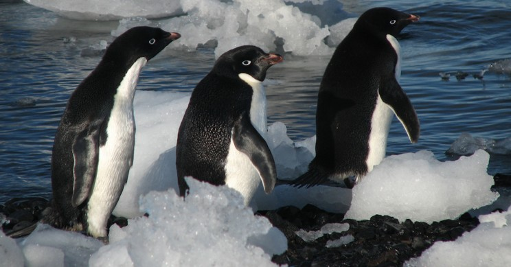 myths about Antarctica penguins only