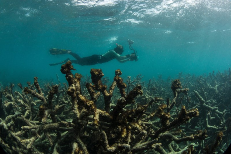 Genetically Engineered Corals Could Help Save the Coral Reefs