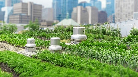 This Company Is Developing Pop-Up Urban Farms for City Streets
