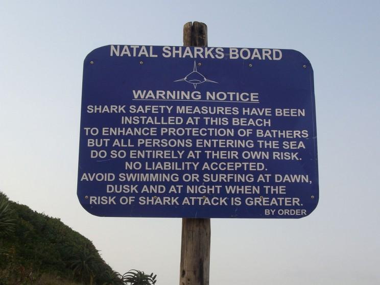 shark notice