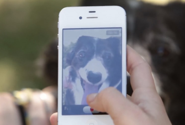 This App Uses Facial Recognition to Reunite Pets with Owners After Hurricane Harvey