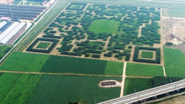 This Massive QR Code Made of 130,000 Trees Can Only Be Scanned From the Sky