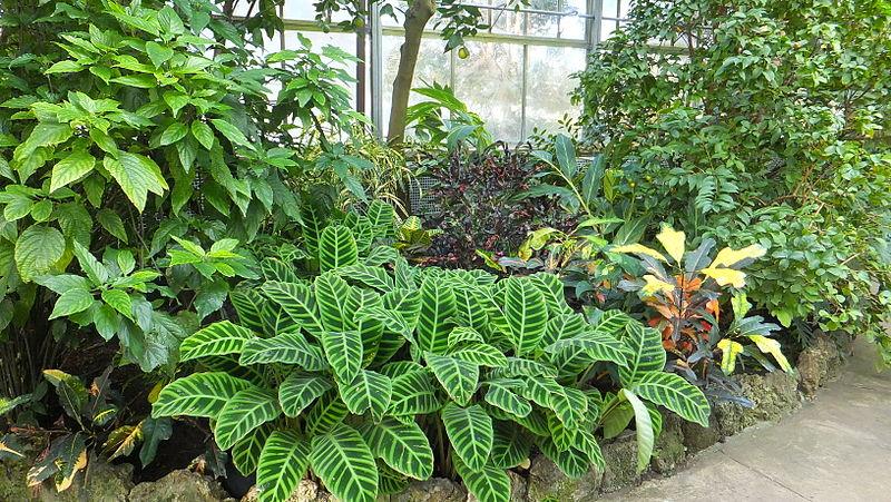800px-Plants_Conservatory