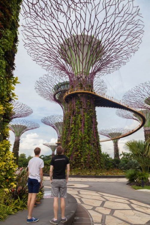 singapore-gardens-by-the-bay-supertree-cloud-forest-1