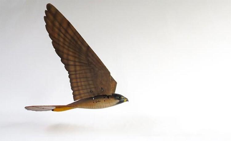 robirds-1