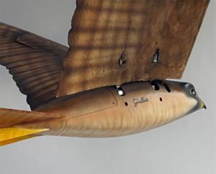 robirds-5