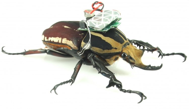 remote-control-giant-flower-beetles-2