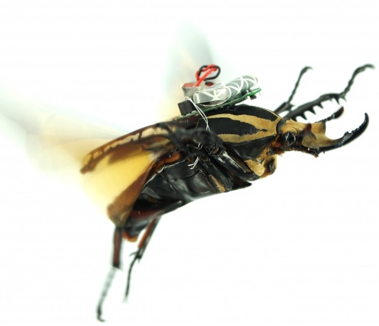 remote-control-giant-flower-beetles-3
