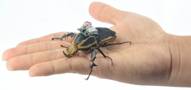 remote-control-giant-flower-beetles-4