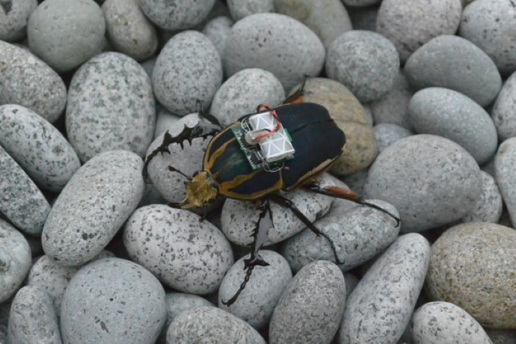 remote-control-giant-flower-beetles-6