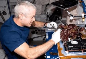 space grow vegetables
