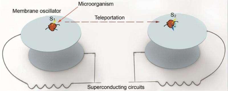 Quantum_teleportation_experiment