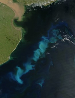 rsz_phytoplankton_bloom_in_the_south_atlantic