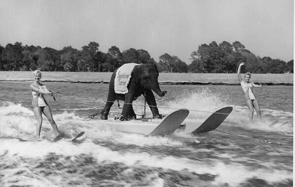 13. Queenie, the skiing elephant (1950)
