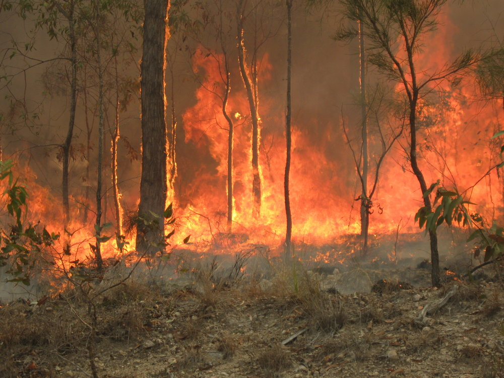 rsz_1australian_bushfire_wikipedia_commons_captain_creek_qld