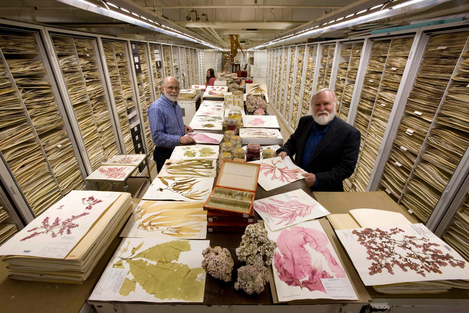 The Botany Department Herbarium at the Smithsonian Institution's National Museum of Natural History, displaying algae specimens, including coraline algae, wet specimens and the usual herbarium sheets. Featured researchers: Dr. James Norris (right, front), his research assistant Bob Sims (left, front), and associate researcher, Katie Norris (left, back).